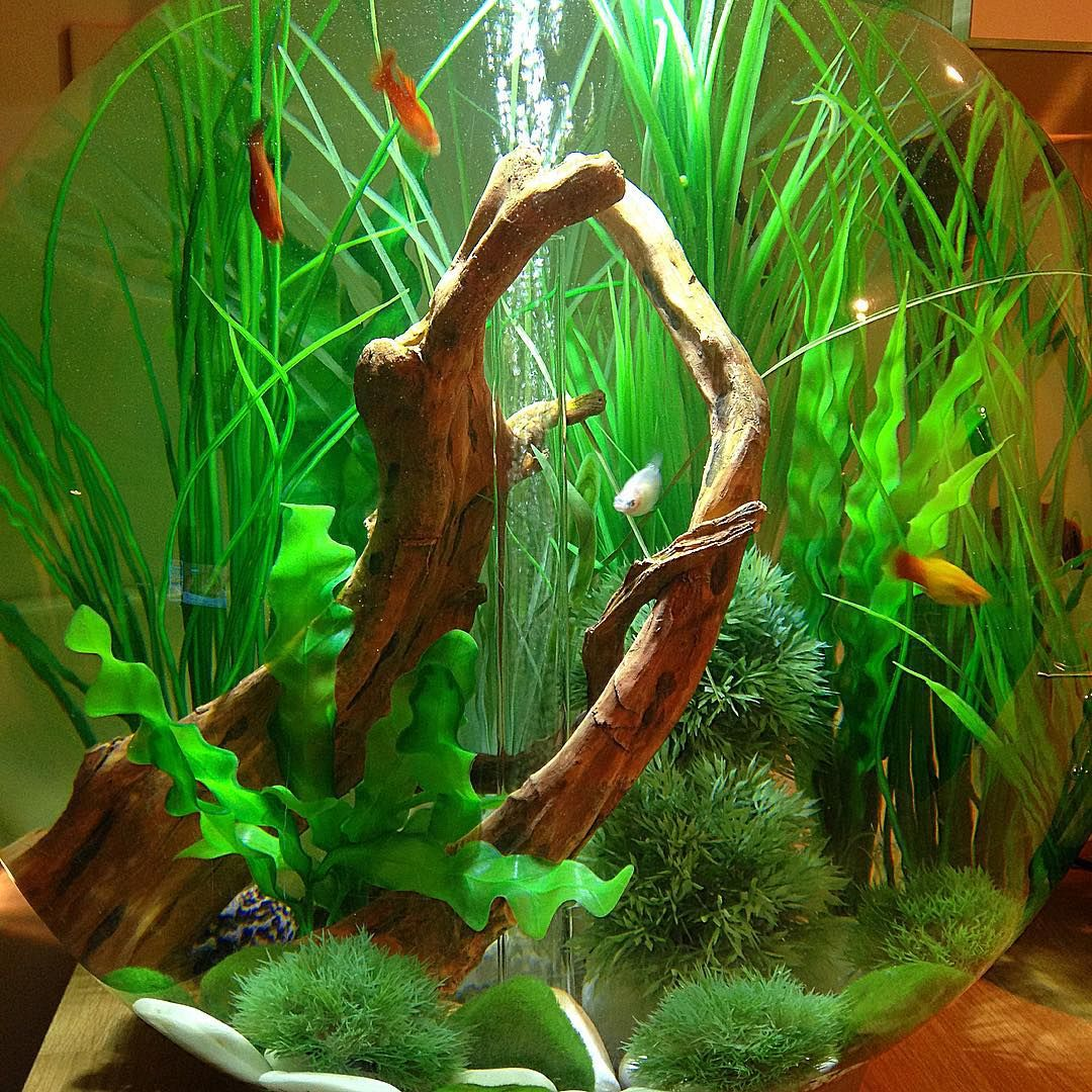 Fish tank cleaned out fishtank fishbowl biorb biorb60 for Fish tank rock cleaner