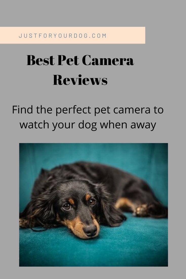 Best Pet Camera Reviews And Comparison Pet Camera Pets Camera Reviews