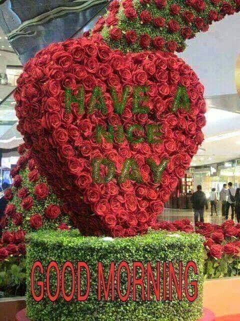 Good Morning Good Morning Images Flowers Love Flowers Beautiful Roses