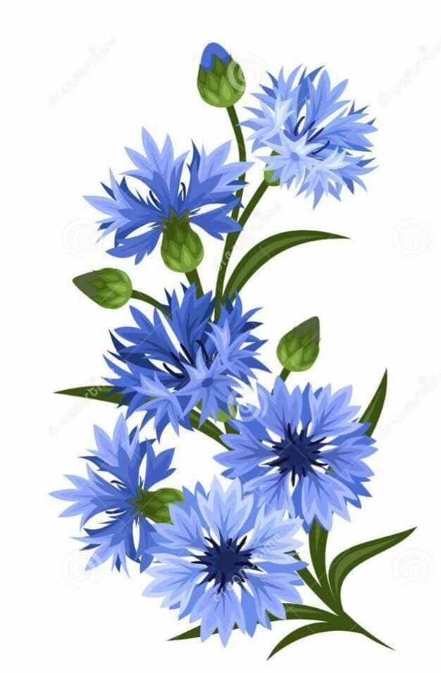 Cornflowers Flower Painting Watercolor Flowers Floral Painting