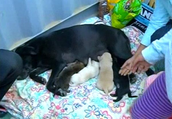This heroic mother dog is not just brave — she's also very smart.