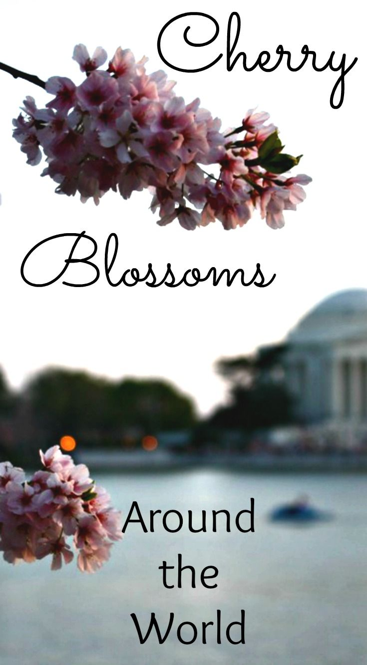 Where To See Cherry Trees In Spring Around The World Around The Worlds Cherry Blossom World
