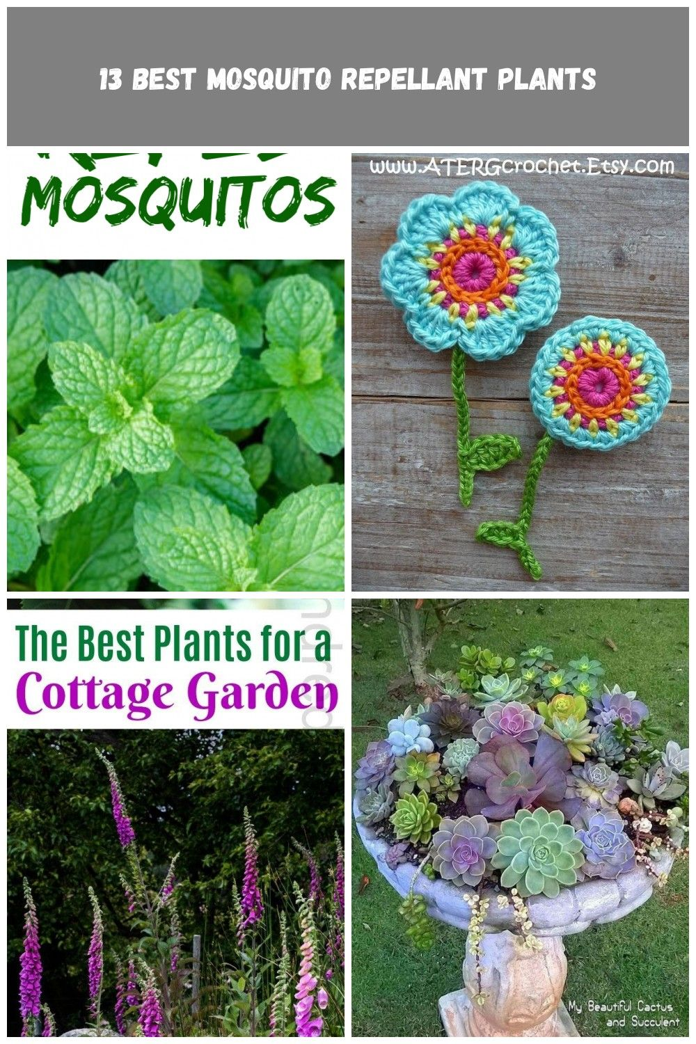 Plant these herbs flowers and other plants to repel mosquitos These are all great plants to add to your landscape  your front side or back yard flowers Garden Best Backya...