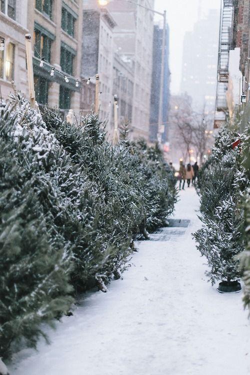 C\u0027est la belle vie ◇ Winter Pinterest Violets, Winter and
