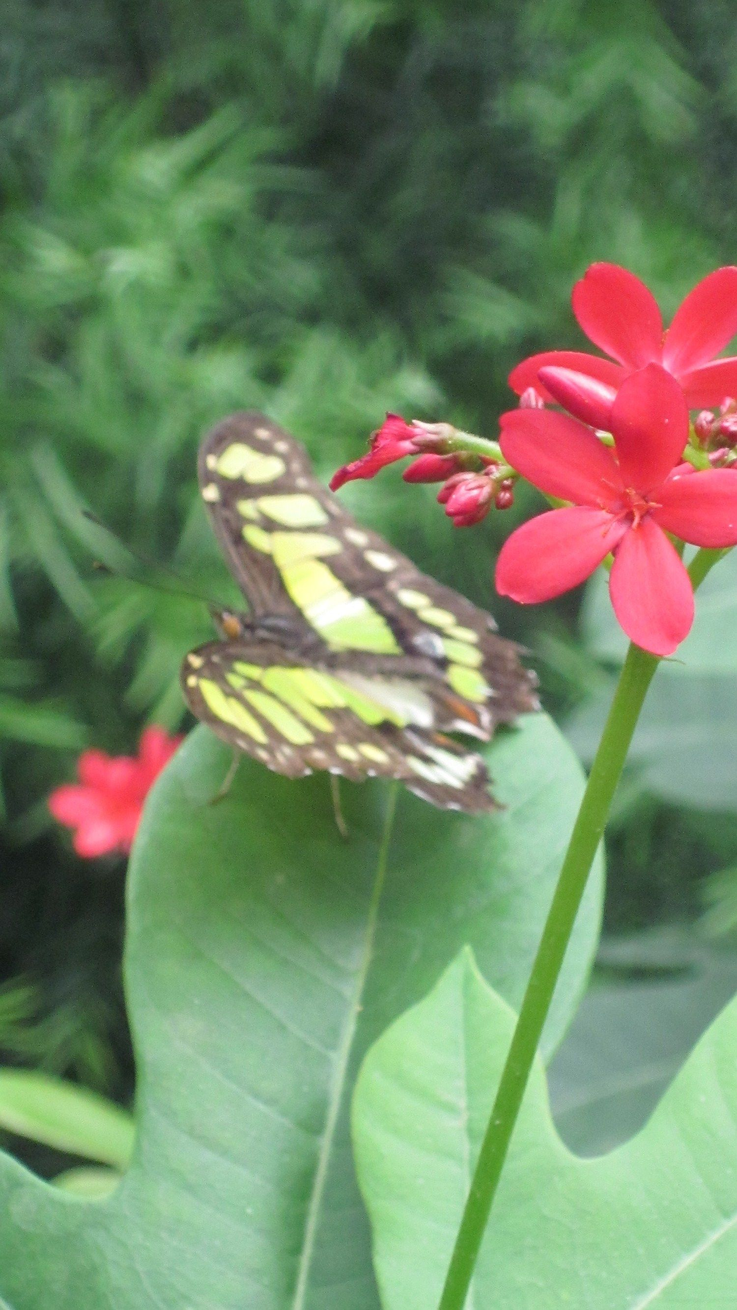 It's never winter in the Dallas Fair Park butterfly house ...