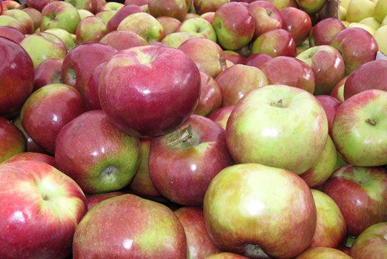 Atemberaubend It's apple season on the east end of Long Island. Macoun and @IC_79