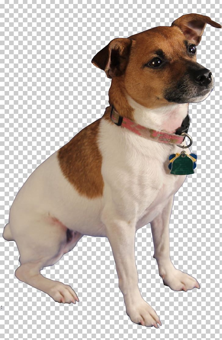 Jack Russell Terrier Cat PestSniffing Dogs Bed Bug PNG