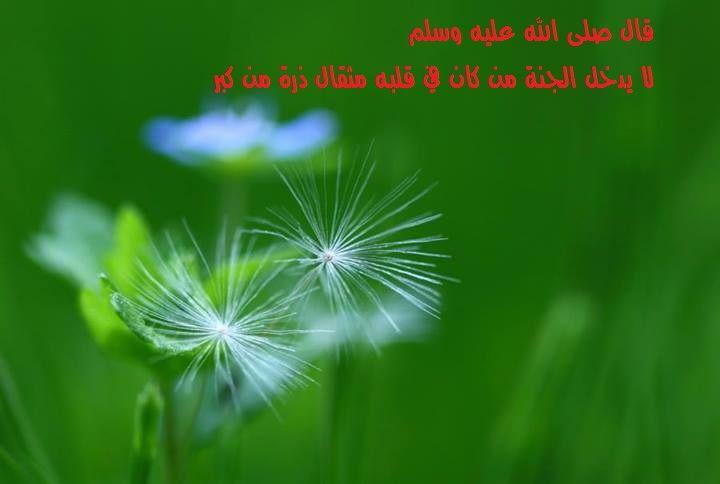 قال صلى الله عليه وسلم لا يدخل الجنة من كان في قلبه مثقال ذرة من كبر Flowers Plants Dandelion