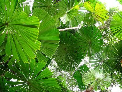 Pics For > Rainforest Canopy Plants | Virginland: The Short Story ...