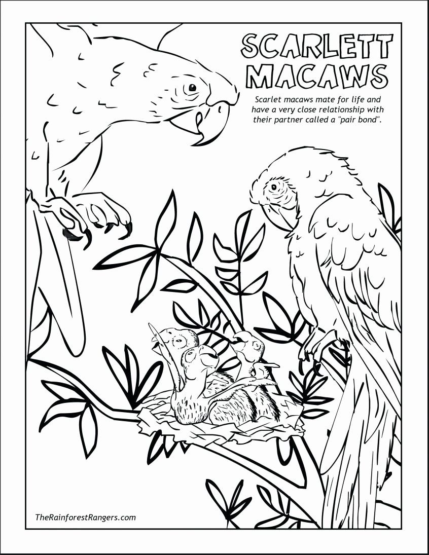 Jungle Printable Coloring Pages Awesome Coloring Jungle Animal Coloring Pages Hwnsurf Me Animals Animal Coloring Pages Animal Coloring Books Coloring Pages [ 1095 x 846 Pixel ]