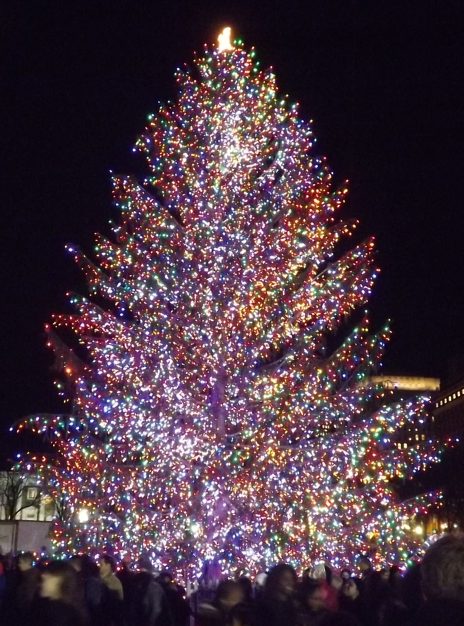 Christmas tree lighting in New Haven CT Christmas