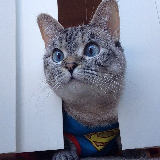 I can save the world! #cat #superman #supercat