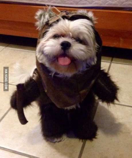 Perfect Halloween costume Wicket & Perfect Halloween costume Wicket | Adorable Animals | Pinterest ...