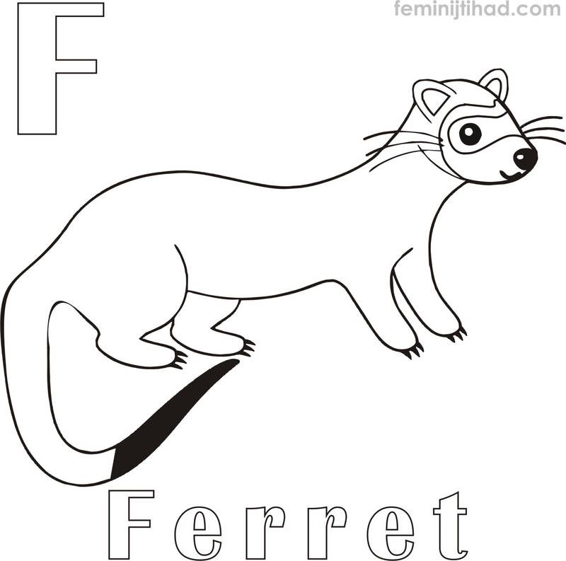 Ferret Coloring Pages To Print Pdf Free Coloring Sheets Ferret Colors Animal Coloring Pages Baby Ferrets