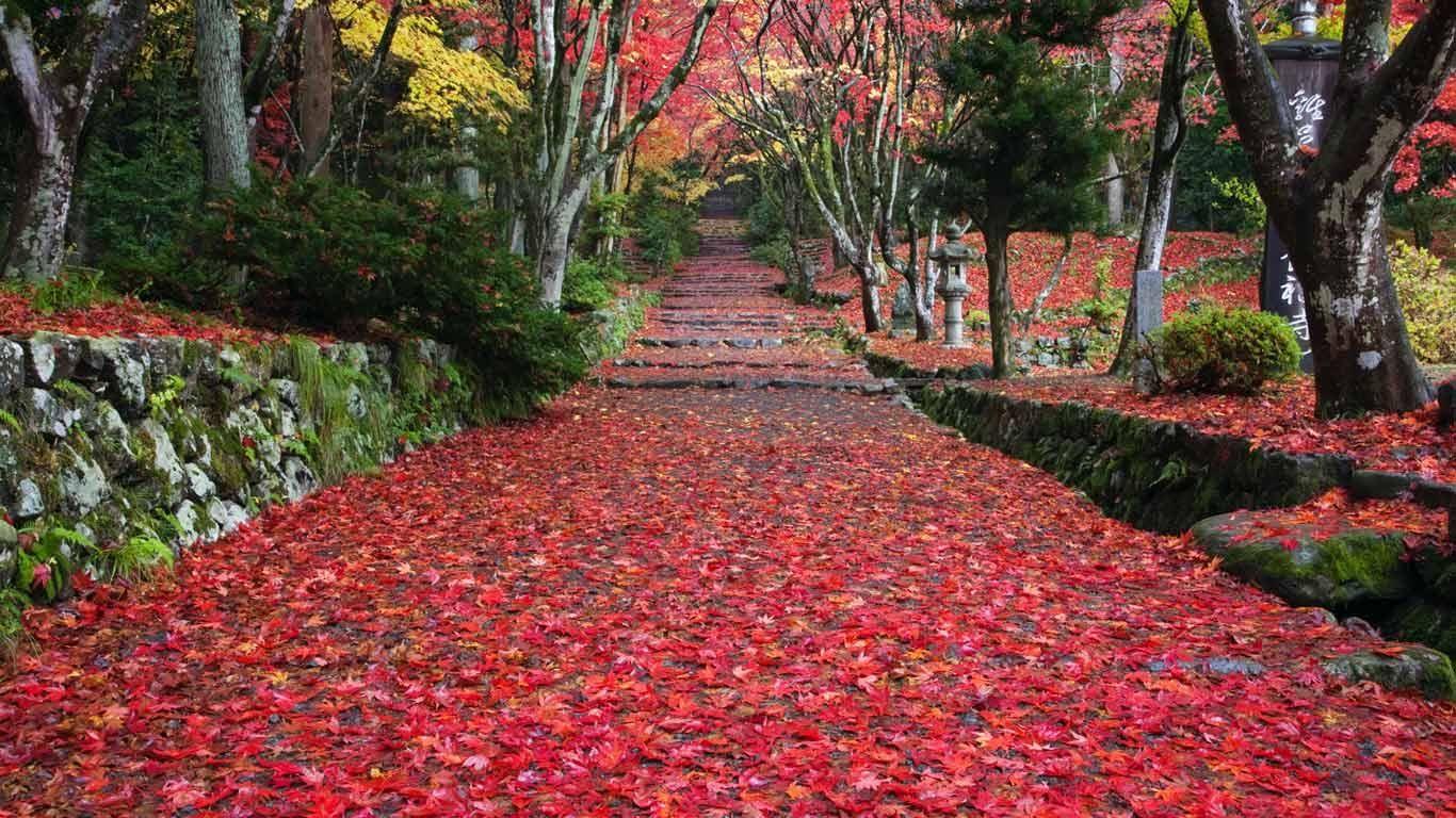 2012/11/21:滋賀県 長浜、鶏足寺