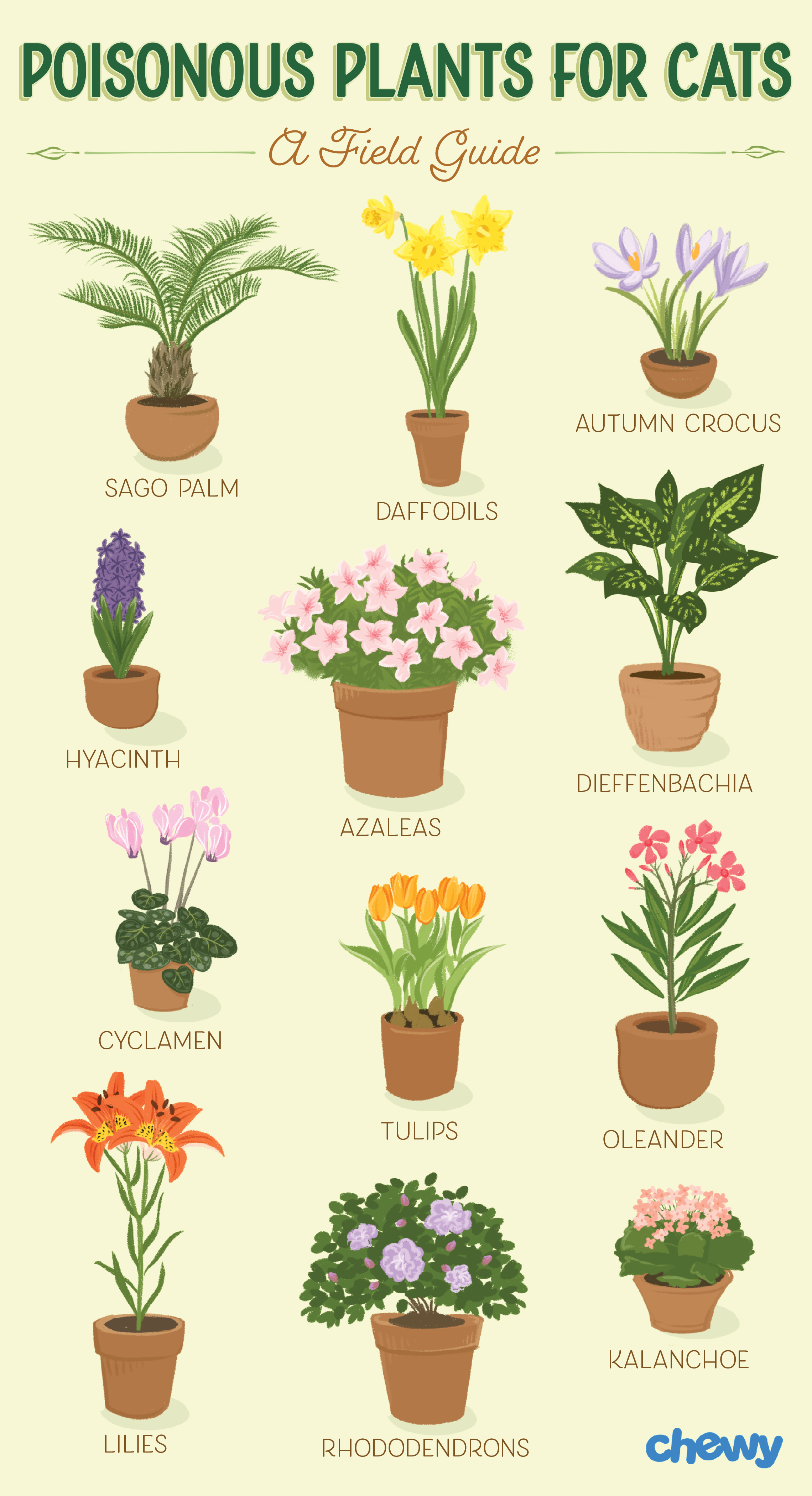 Which Plants Are Poisonous To Cats A Complete Guide Cat Plants Houseplants Safe For Cats Plants