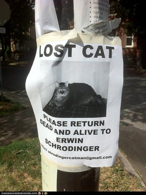 Have You Seen Schrodinger's Cat?