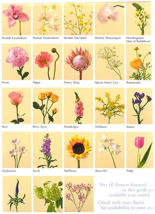 Flower Meanings List Of Flowers And Their Meanings Irish Flower List Of Flowers Flower Meanings