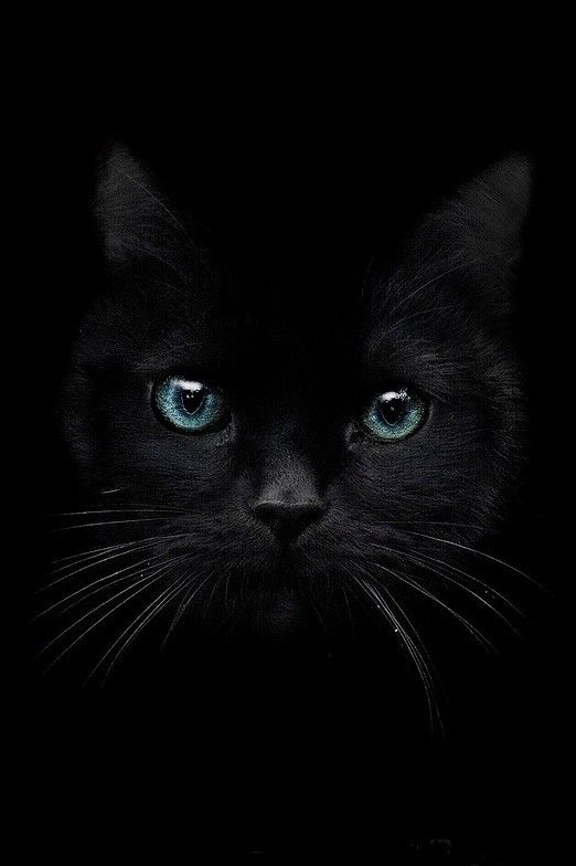 BLACK | Darian