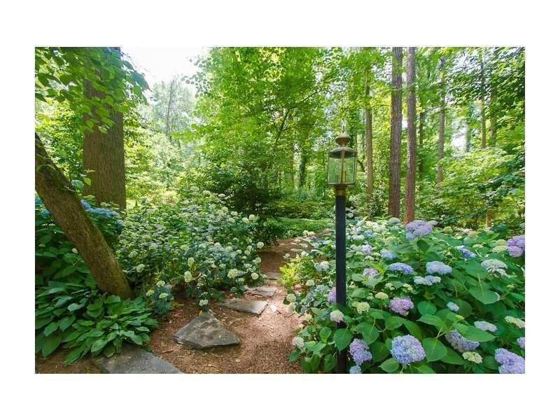 Woodland Garden With Hydrangea Hosta Ferns Woodland Garden