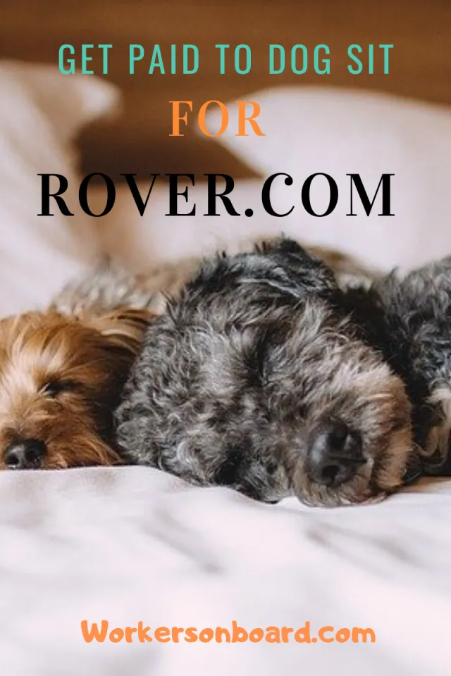 Get Paid To Dog Sit For Rover Com Workersonboard