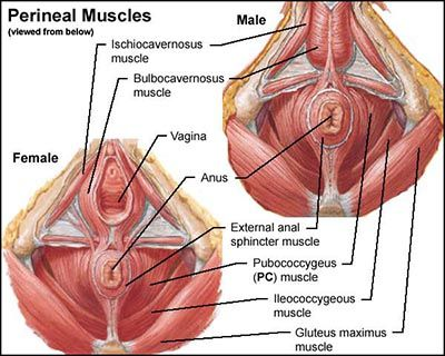 Pc muscle exercises female