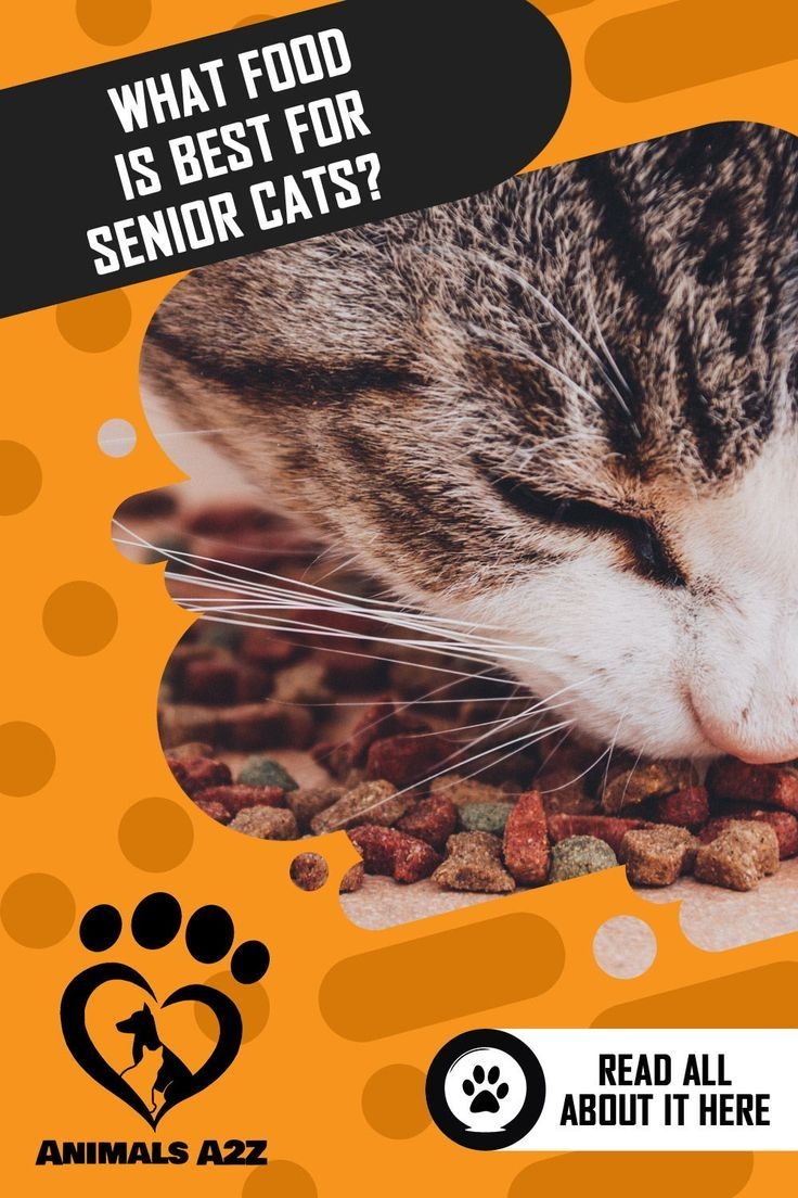 Is There A Soft Dry Cat Food for Older Cats? [ Detailed