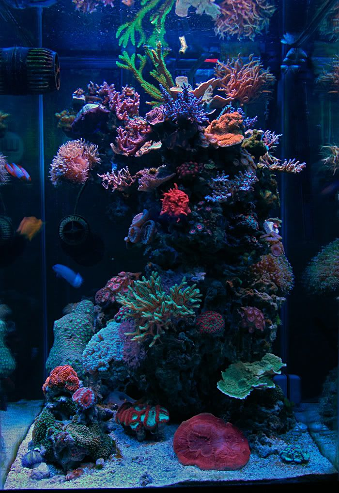 c107483a1094 Show me your Pillars!! - Page 3 - Reef Central Online Community ...