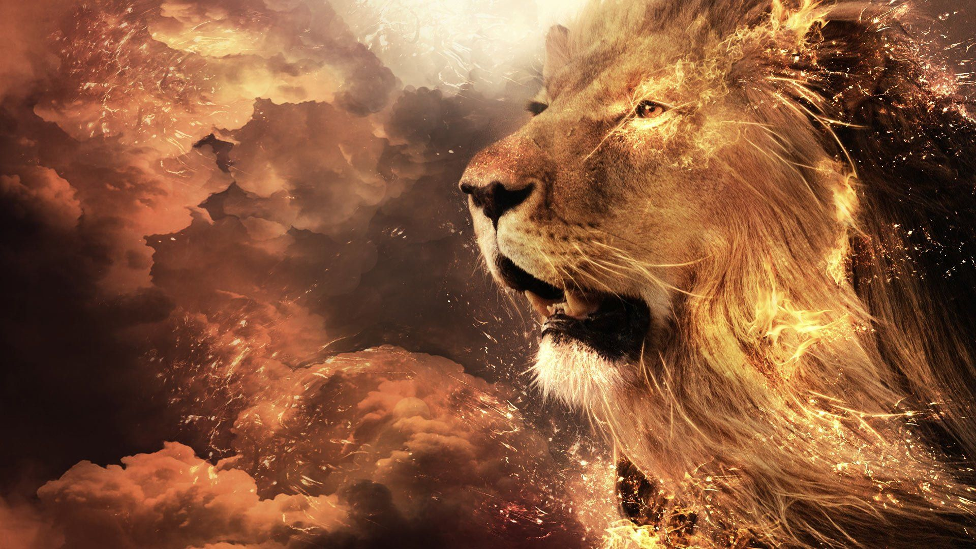 Fire Lion Hd Wallpaper Animais Le 227 O Papel De Parede Drapieżne Koty Pinterest