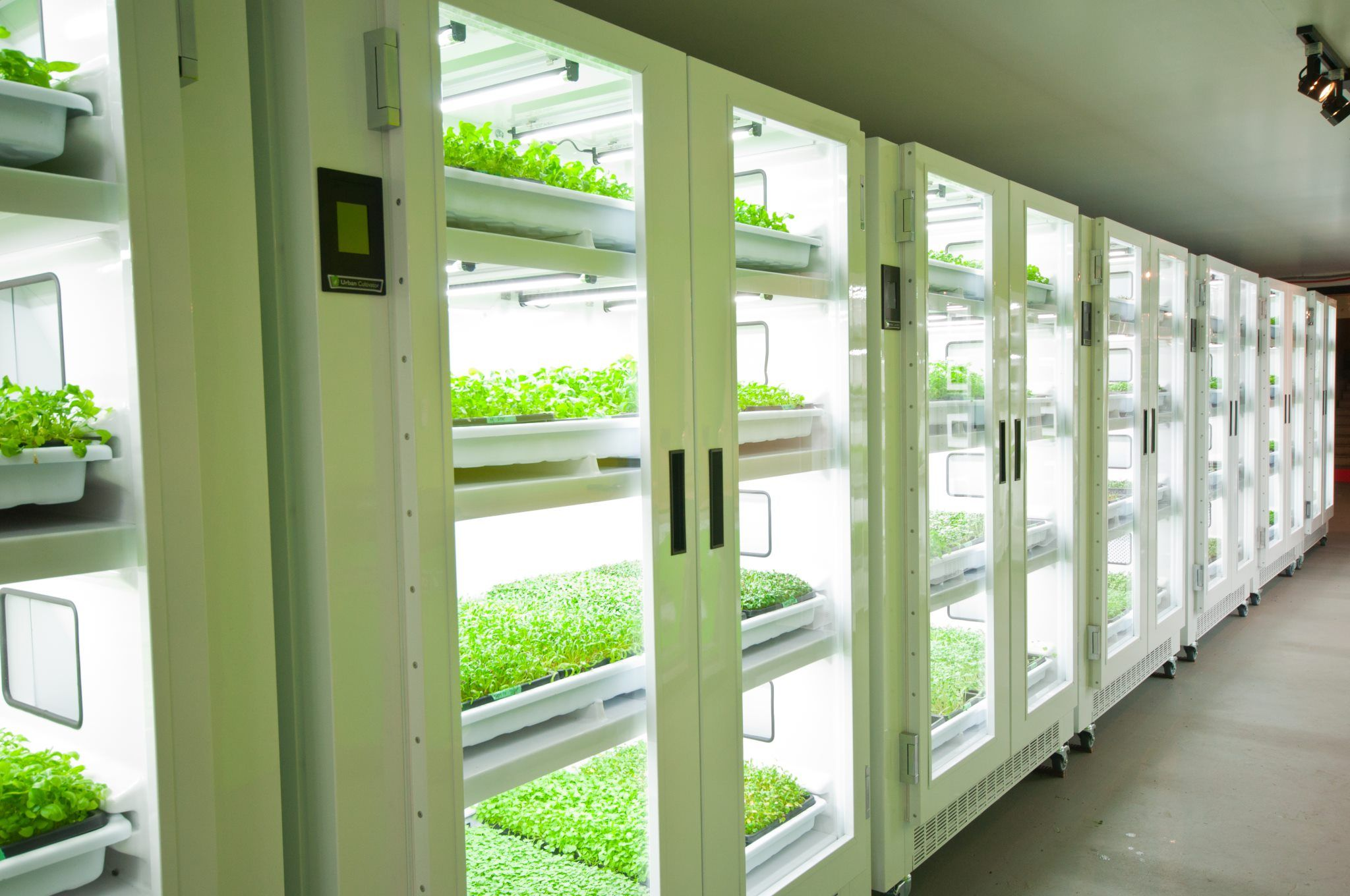 Wall Of Commercial Units For Indoor Gardening Urban Farming Microgreens Hydroponics