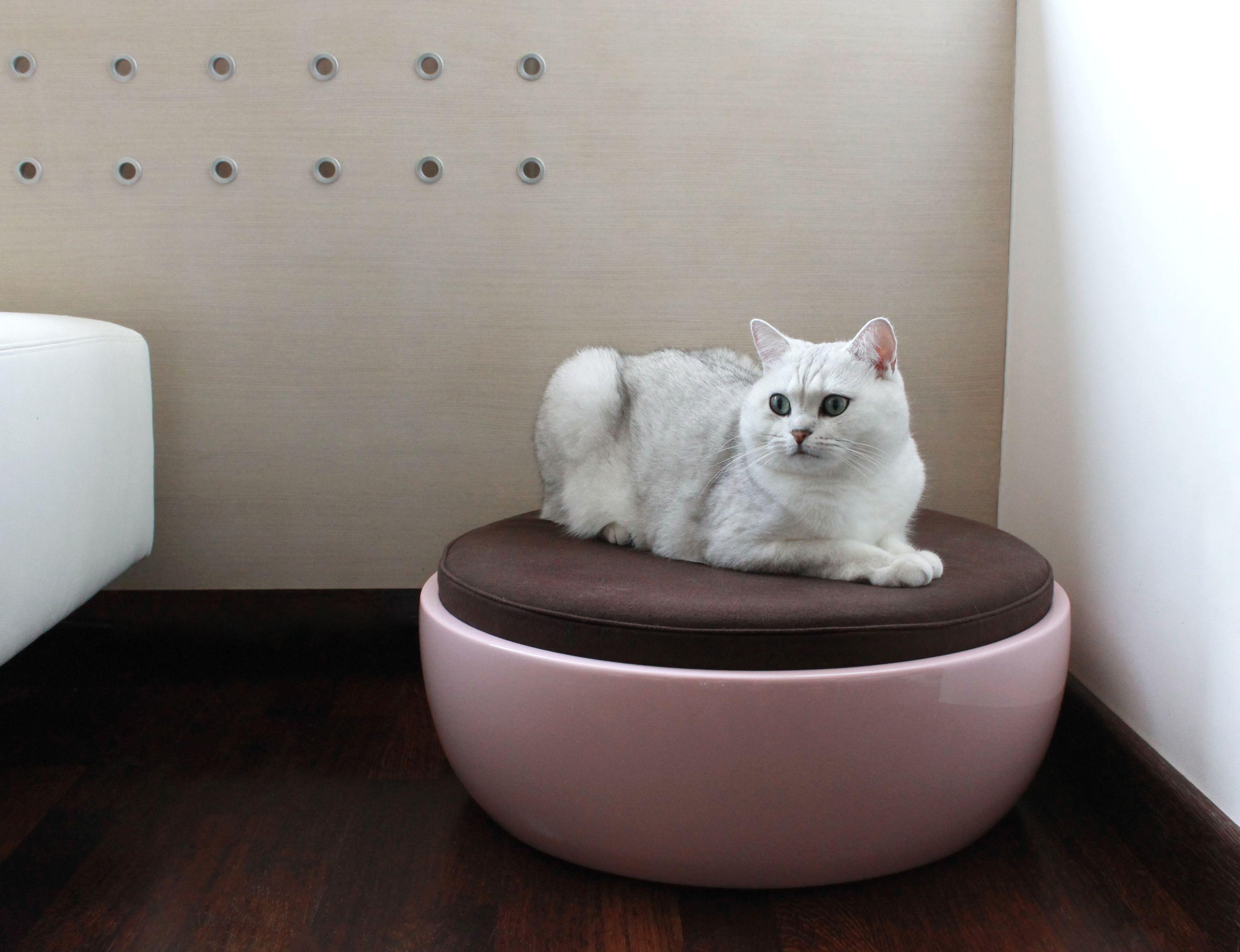 Relaxed and calm. Designer pet beds, Pet sofa, Pet beds