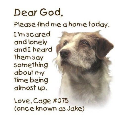 :: a shelter dog's prayer :: Heartbreaking. The terrible odds against unwanted dogs and cats - especially for dogs who are truly domesticated. It's the injustice and not being able to explain to them... I don't know how to get over this.