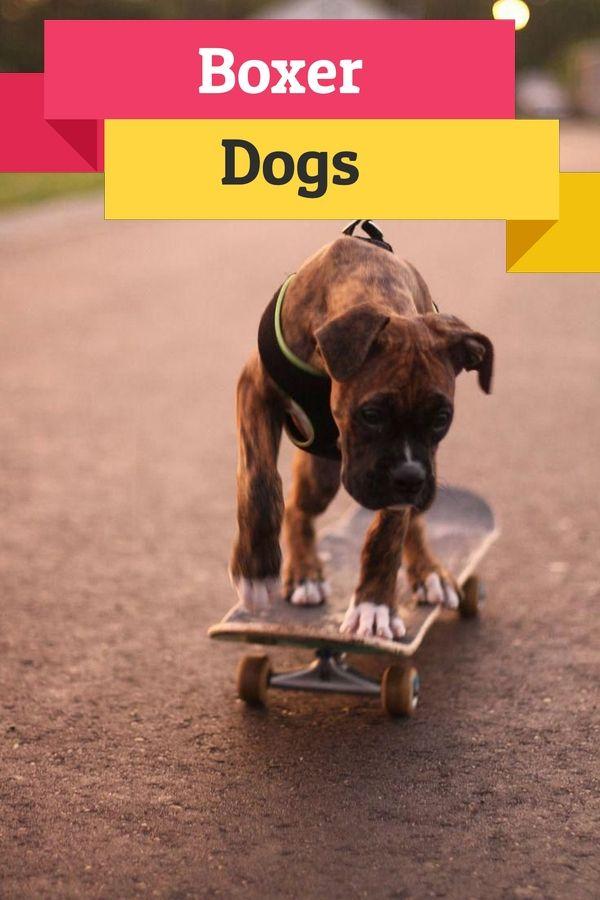 15 Boxer Puppy Blue Boxerdogandpuppies Boxerdogcartoon In 2020