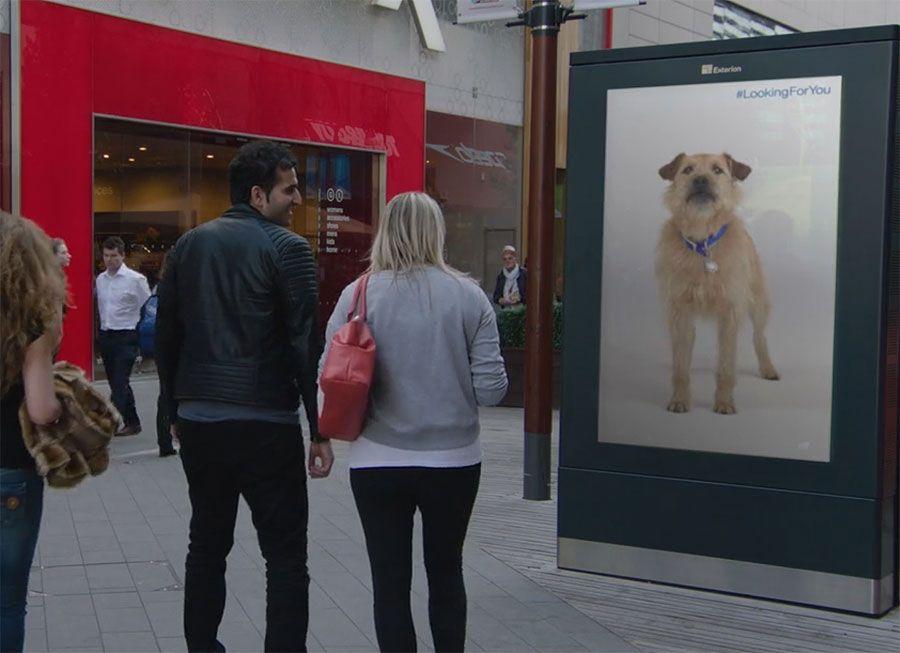 Battersea Dogs Home Follow You Billboards Digital Buzz Blog