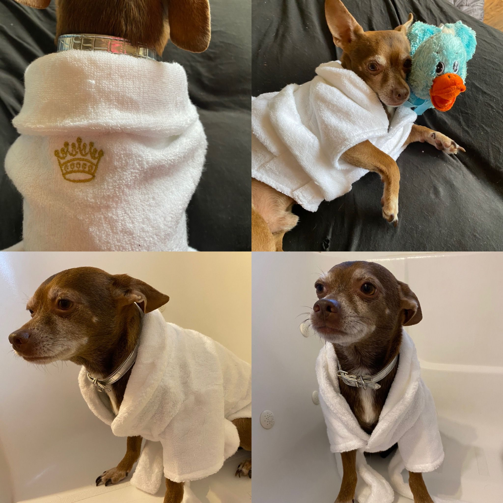 Pin On Dog Products