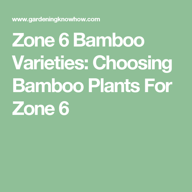 Hardy Bamboo Plants Growing Bamboo In Zone 6 Gardens Growing