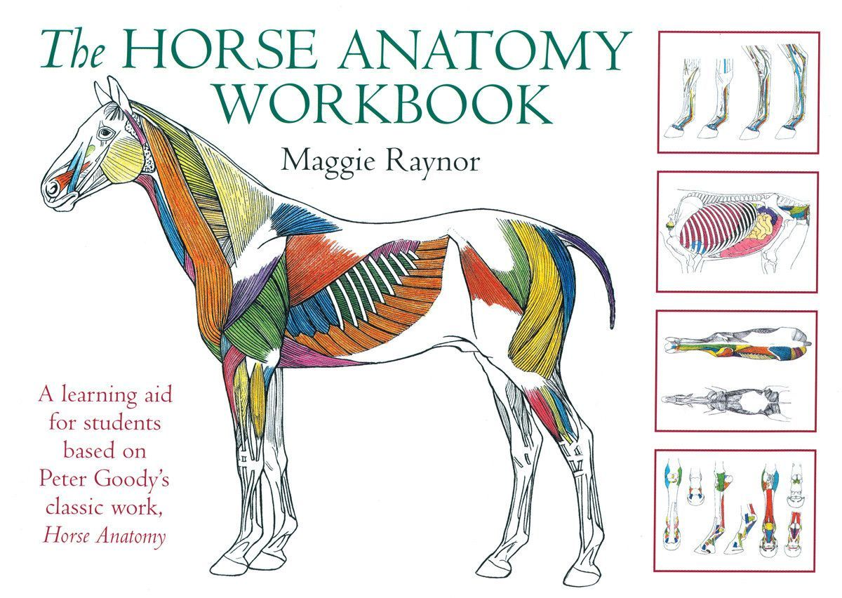 Horse Anatomy Workbook: A learning aid for students based on Peter ...