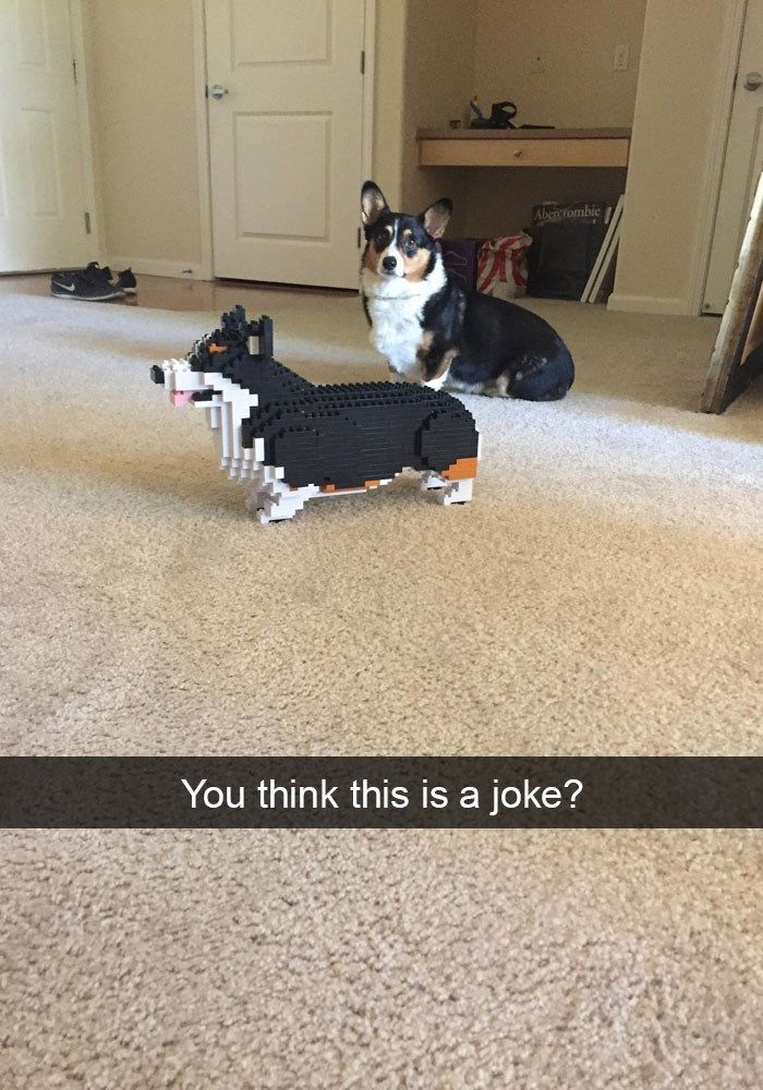 37 Hilarious Animal Snaps to Help Restore Your Faith in Humanity #hilariousanimals