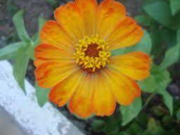 Resultado De Imagem Para 25 Flores Silvestres E Seus Nomes