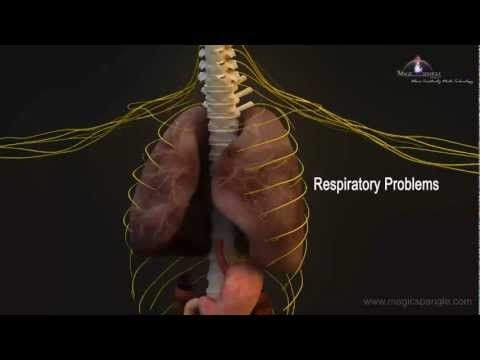 3D Medical Animation - Central Nervous System - YouTube | high ...