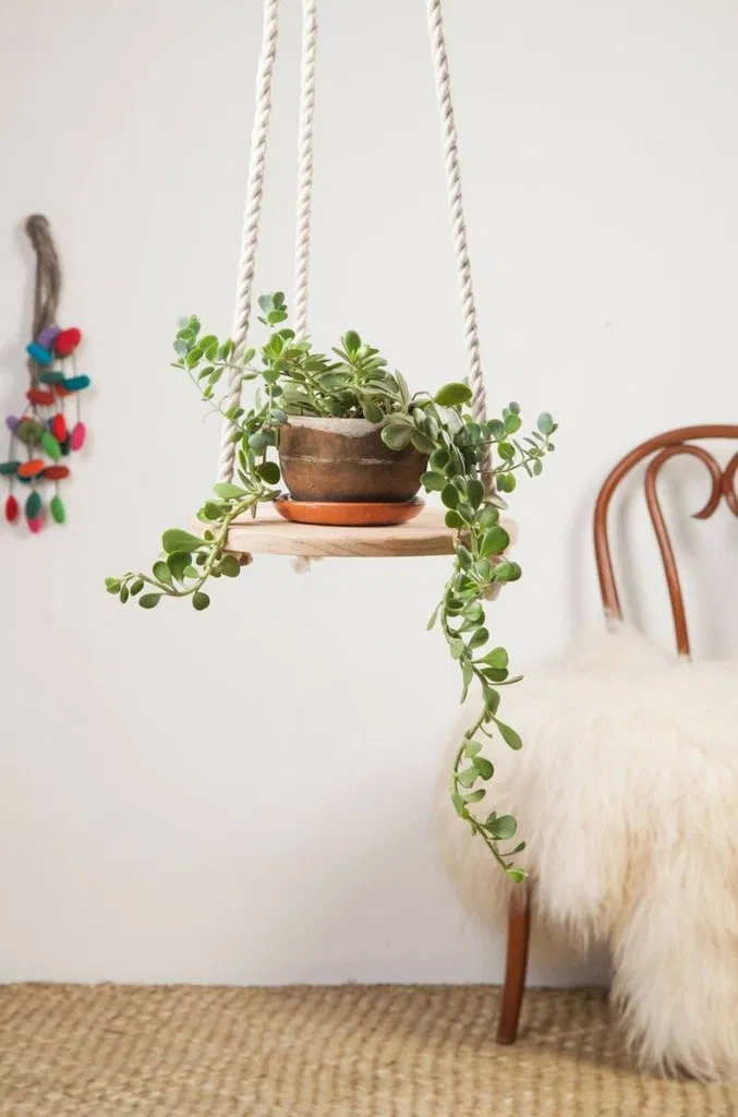 Plant Decor Indoor Hanging Plants