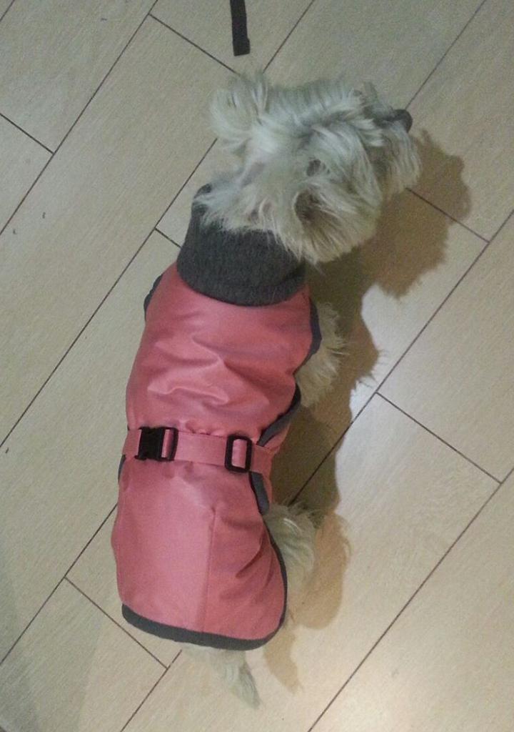 Patrón abrigo para perro | Ropa para perros | Pinterest | Abrigos ...