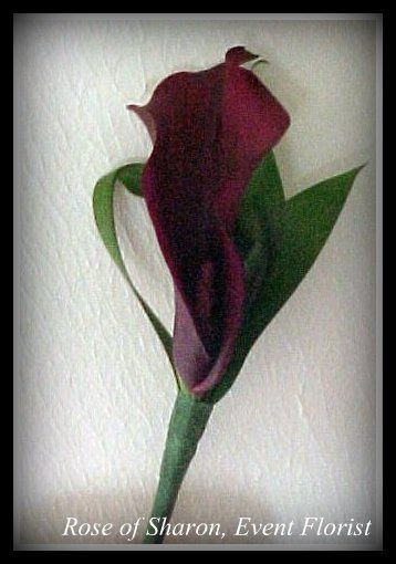 Boutonniere-Burgundy Calla Lily  #RoseOfSharon