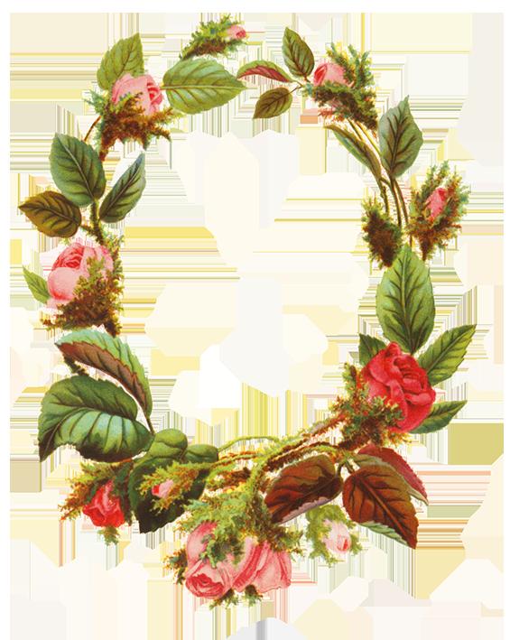 Flower borders and frames Flower frame, Flower clipart
