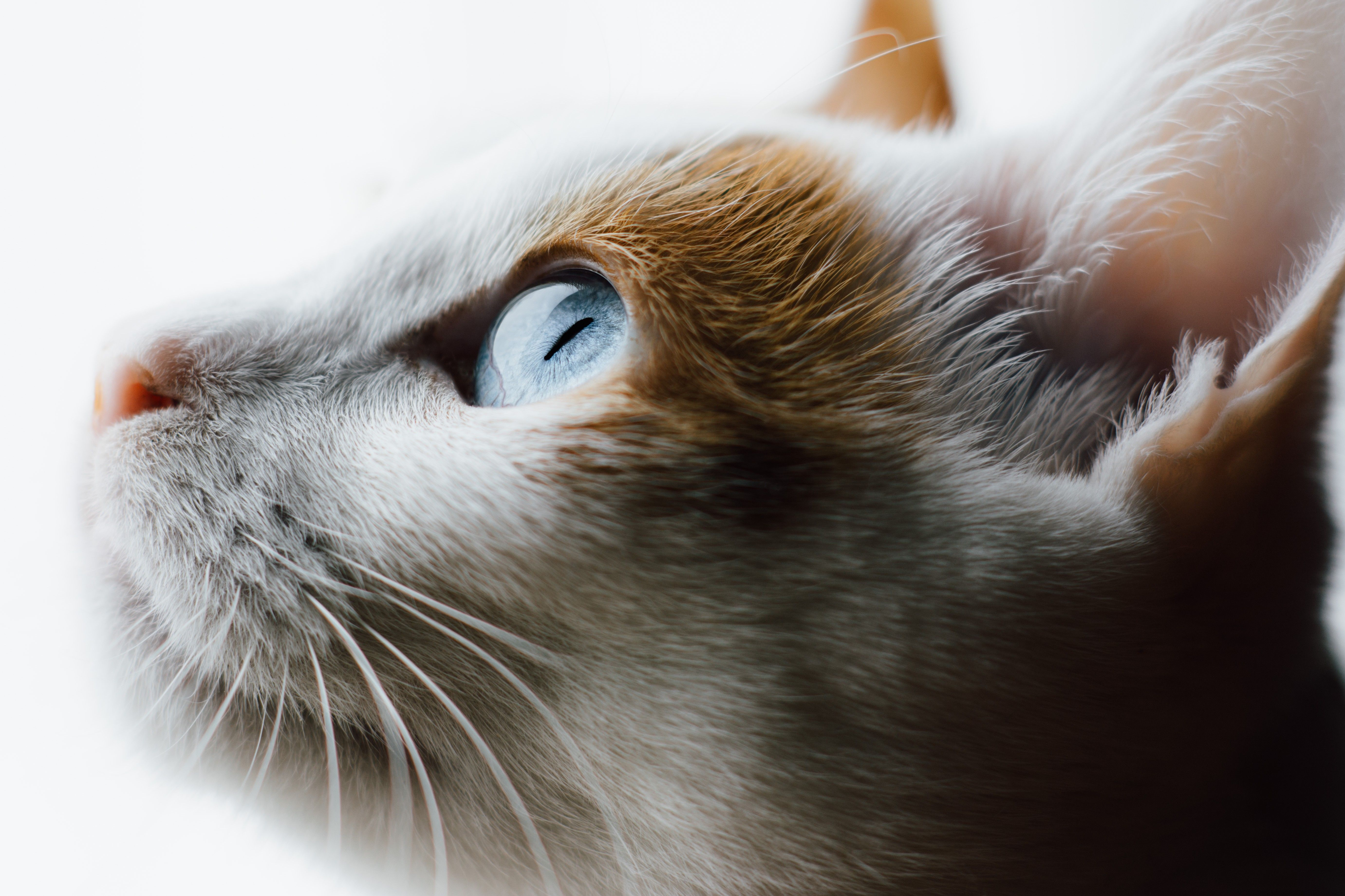 Experts Say These Are the Smartest Cat Breeds (With images