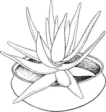 Kleurplaat Tekening Sjabloon Dessin Patroon Bloem Plant