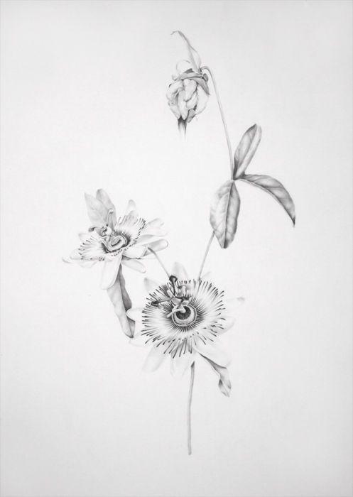 The Surreal Illustration Work Of Langdon Graves Langdongraves 1 20130107 1898189843 Jpeg Flower Drawing Botanical Tattoo Tattoos