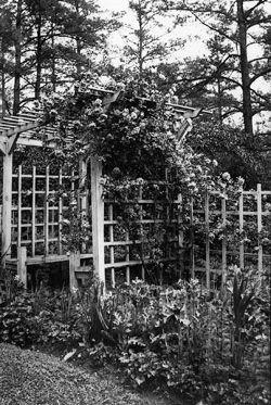 Garden Arbor 1930s Garden Arbor Outdoor Gardens Garden