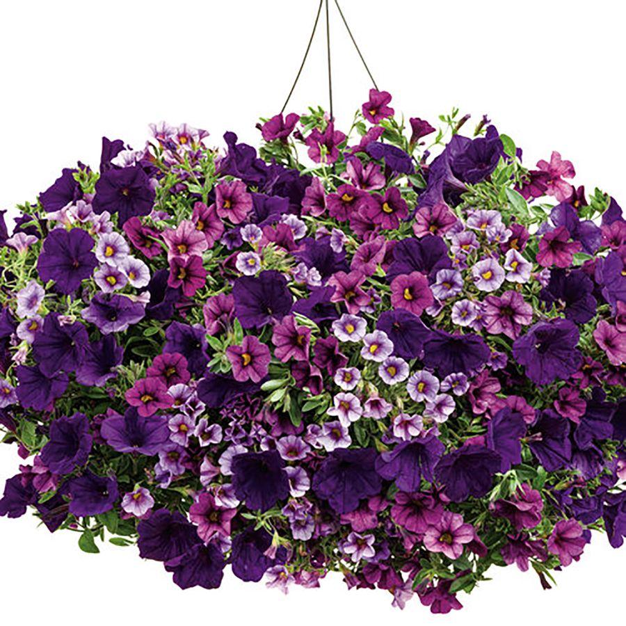 3 gallon combo annual flower arrangement ideas pinterest 3 gallon combo annual flower arrangement ideas pinterest gardens garden ideas and flowers izmirmasajfo