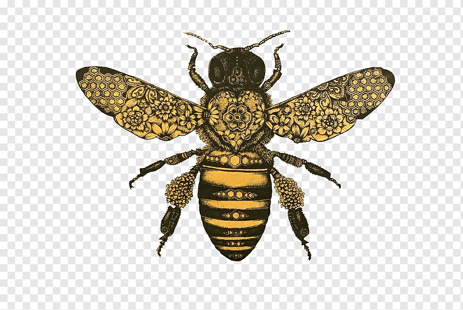 Yellow And Black Bee Illustration Honey Bee Drawing Bumblebee Bee Insects Painting Queen Bee Png Honey Bee Drawing Bee Drawing Bee Illustration